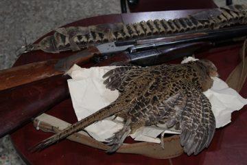 دستگیری یک شکارچی غیر مجاز در شهرستان رضوانشهر