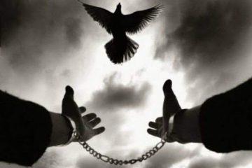 با کمک محسن چاووشی و جمعی از خیرین ۱۲ نفر از زندانیان در زندان ضیابر به آغوش گرم خانواده بازگشتند